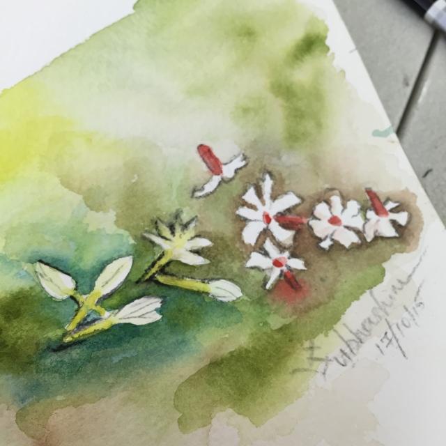 Day 5: Varieties of Jasmine